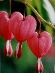 heart-sm.jpg